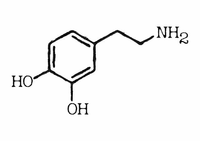 Dopamin: Das verdammte Suchtgedächtnis