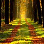 Mein Weg ins Freie